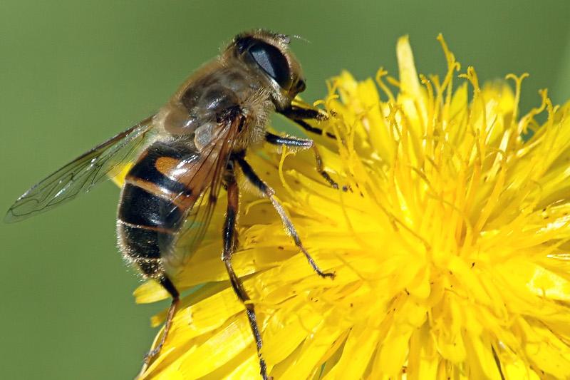 La mel